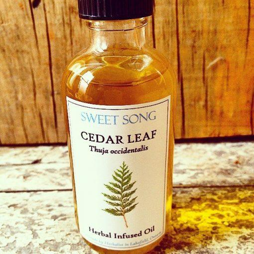 Cedar Leaf infused oil